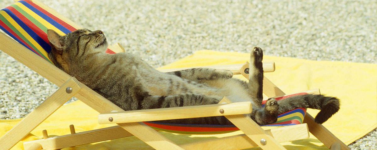 Кошка на пляжном лежаке