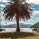 Пальмы на набережной Пиктона