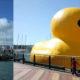 Желтый игрушечный утенок