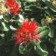 Цветы похатукавы