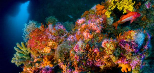 Подводный мир Goat Island
