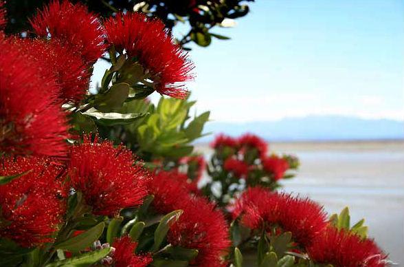 Рождество и Новый год в Новой Зеландии