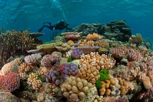 Большой барьерный риф (Great Barrier Reef) Квинсленд, Австралия
