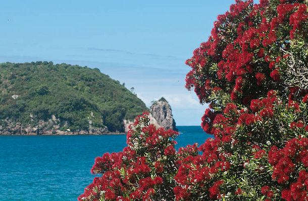 Цветущая похатукава на пляже Хахей