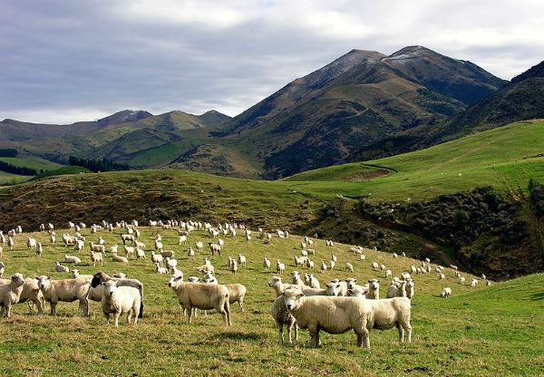 Сельское хозяйство Новой Зеландии