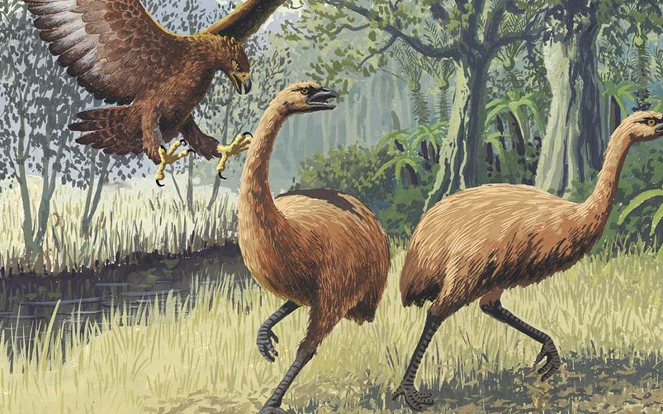 Птицы моа атакованы орлом Хааста