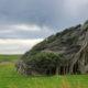 Деревья на Slope Point