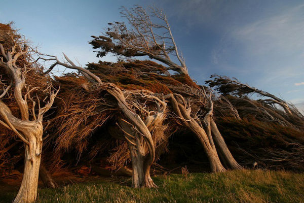 Южный остров Новой Зеландии: Slope Point