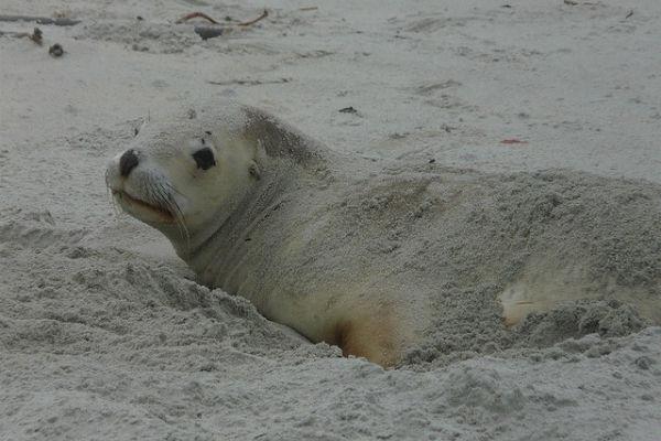 Allans Beach, Данидин, Южный остров