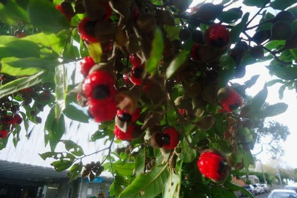 Маленькая история о редком новозеландском растении